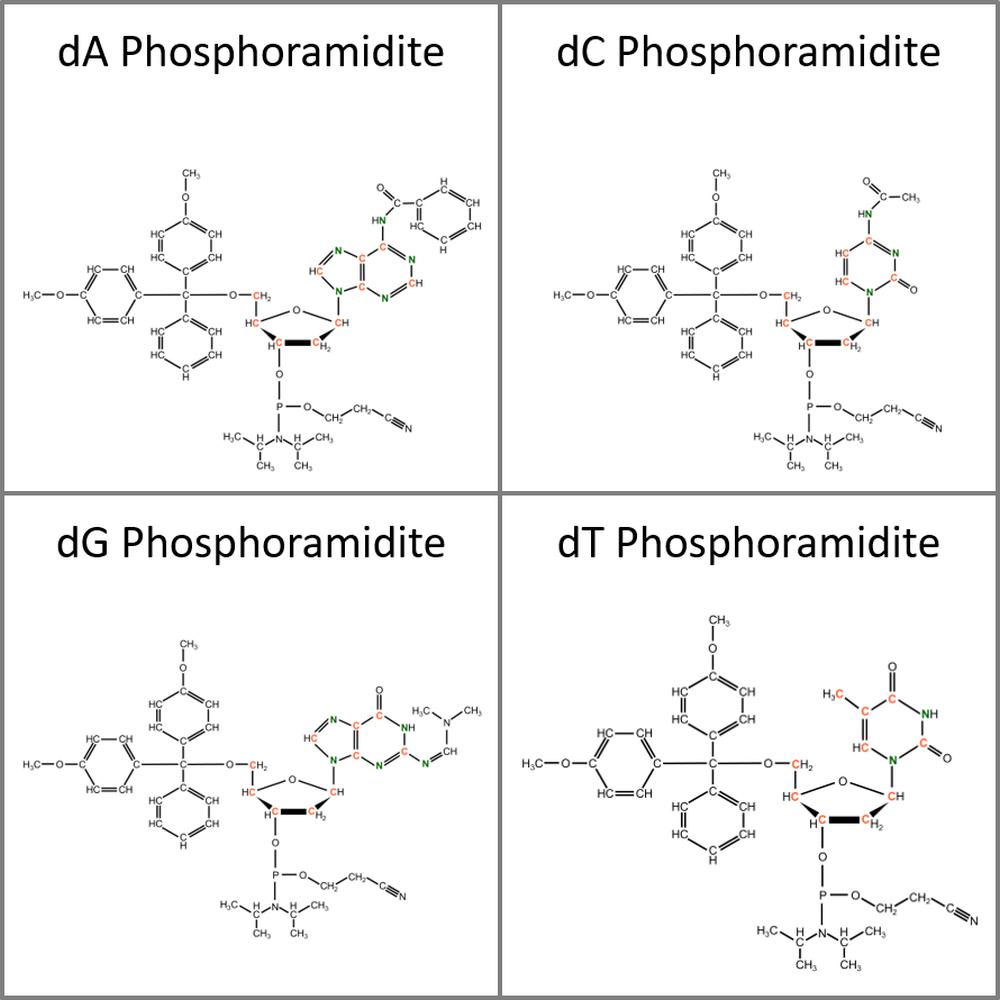 Set of 13C15N-labeled dN Phosphoramidites, 4x10mg